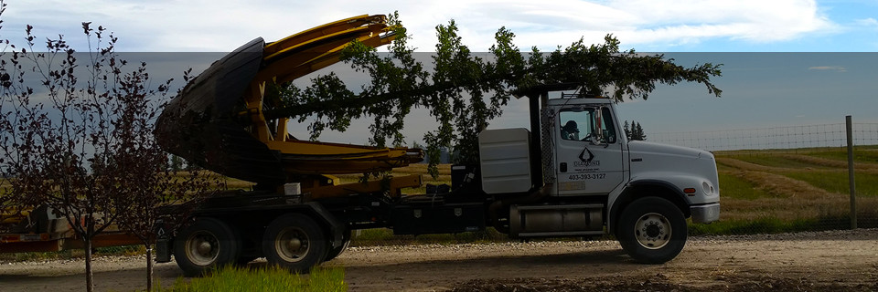 Your tree moving and planting experts since 2001