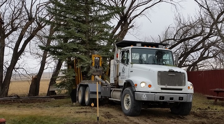 Diamond Tree Moving Ltd  – Your Large Tree Moving Specialists